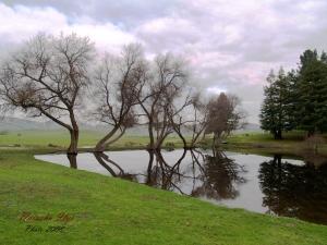 Reflective Scene